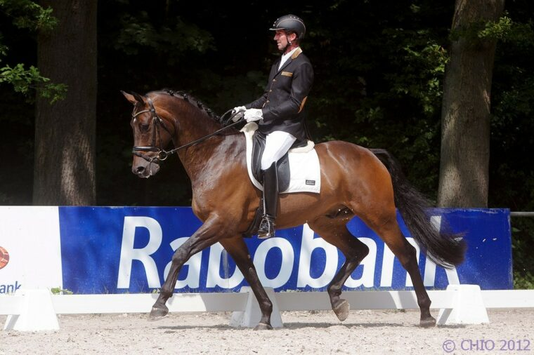 Para Equestrian Olympisch Team Frank Hosmar Alphaville Border Maker